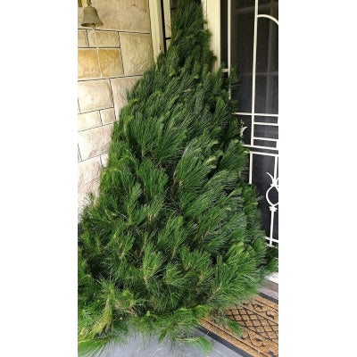Christmas Tree 5-6' + Delivery