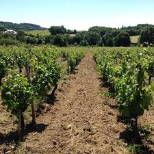 Natural Wine - Nutrients Necessary for Quality Grape Production