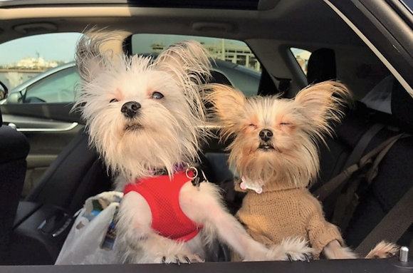 Planning a trip with your pet? Here are the do's and don'ts to make your journey easier