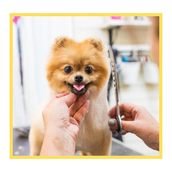 Haircut for Dogs-XOXOtails