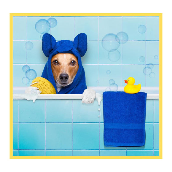 Bathing for Dogs-XOXOtails