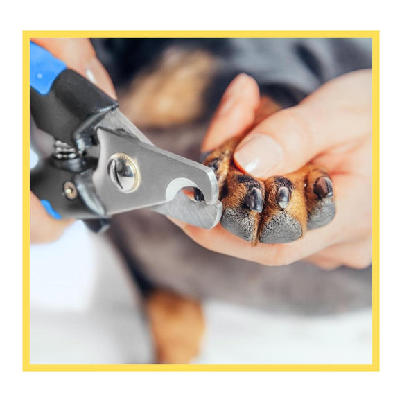 Nail Clipping for Dogs & Cats-XOXOtails