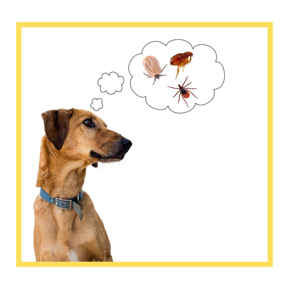 Anti-Tick & Flea Treatment for Dogs