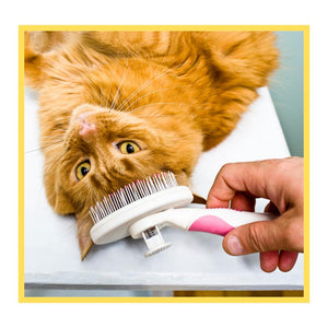 Basic Grooming for Cats
