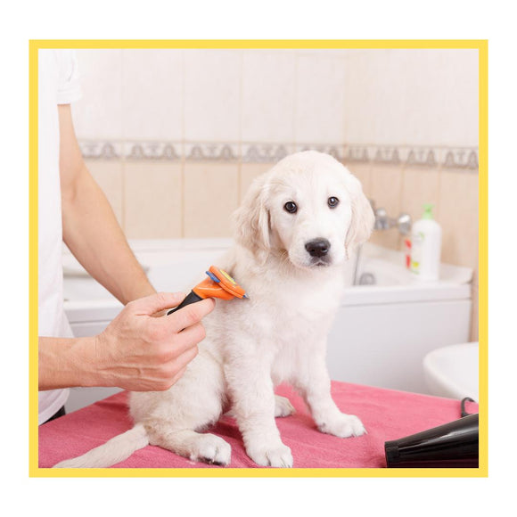 Basic Grooming for Dogs