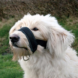 Dog Padded Head Collar-pawproducts.net-Black-XXL-pawproducts.net