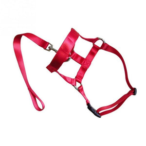 Nylon Dogs Head Collar-pawproducts.net-red-S-pawproducts.net