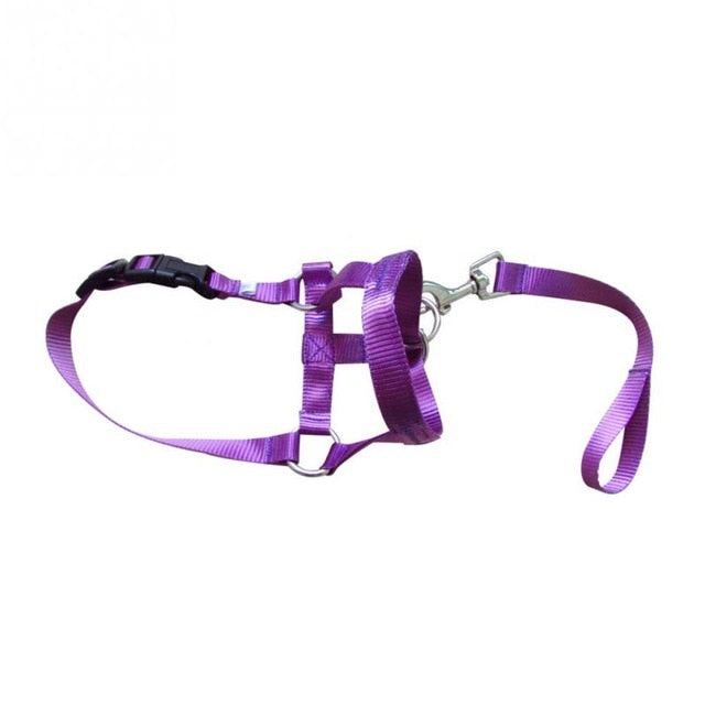 Nylon Dogs Head Collar-pawproducts.net-purple-S-pawproducts.net