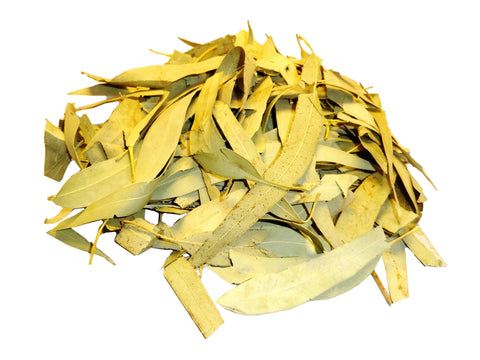 Premium Eucalyptus Leaves