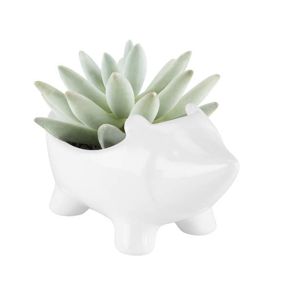 Mini Hedgehog Planter