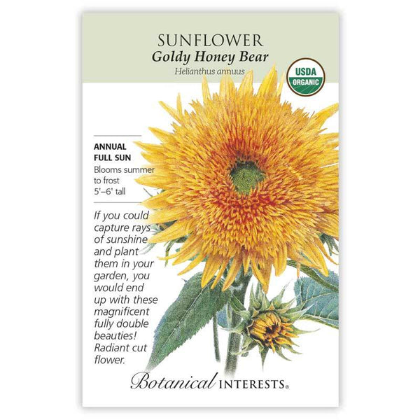 Sunflower, Goldy Honey Bear