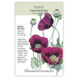 Poppy, Lauren's Grape