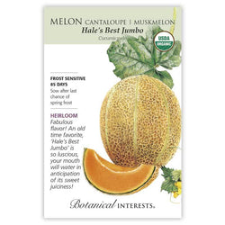 Melon, Hales Best Jumbo