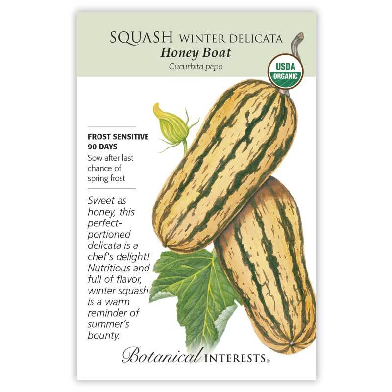 Squash Winter, Delicata