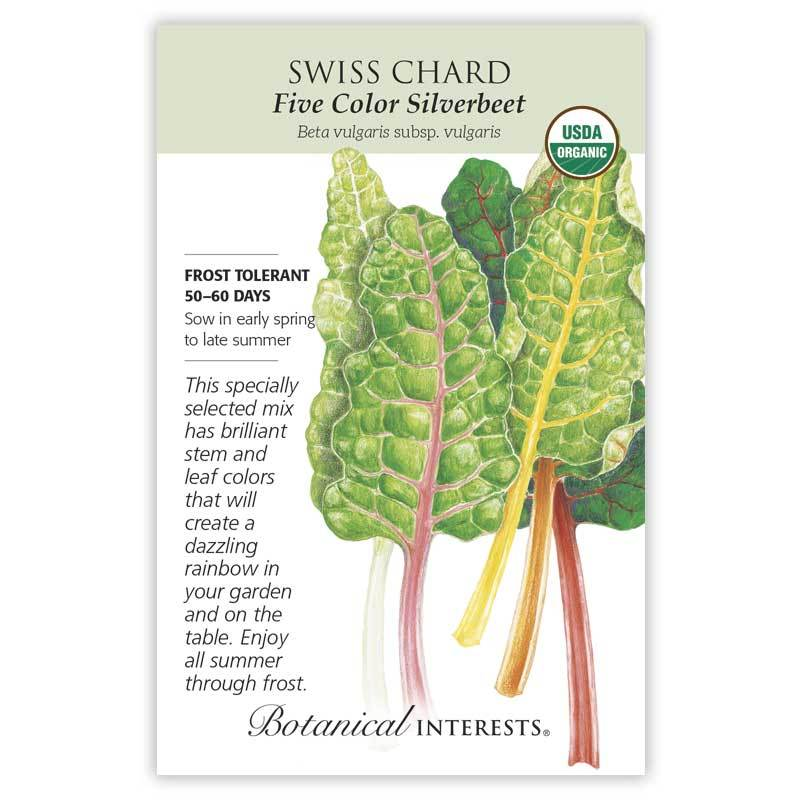 Swiss Chard, Five Color Silverbeet - 2020
