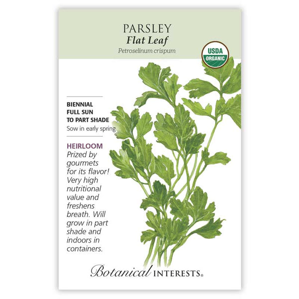 Parsley, Flat Leaf