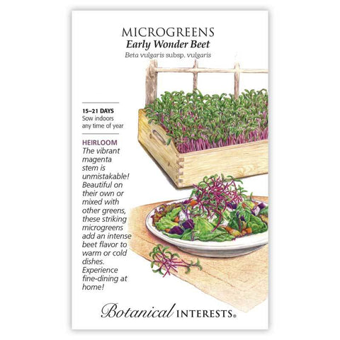 Microgreens, Early Wonder Beet