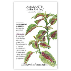 Amaranth, Edible Red Leaf