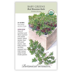 Baby Greens, Red Russian Kale