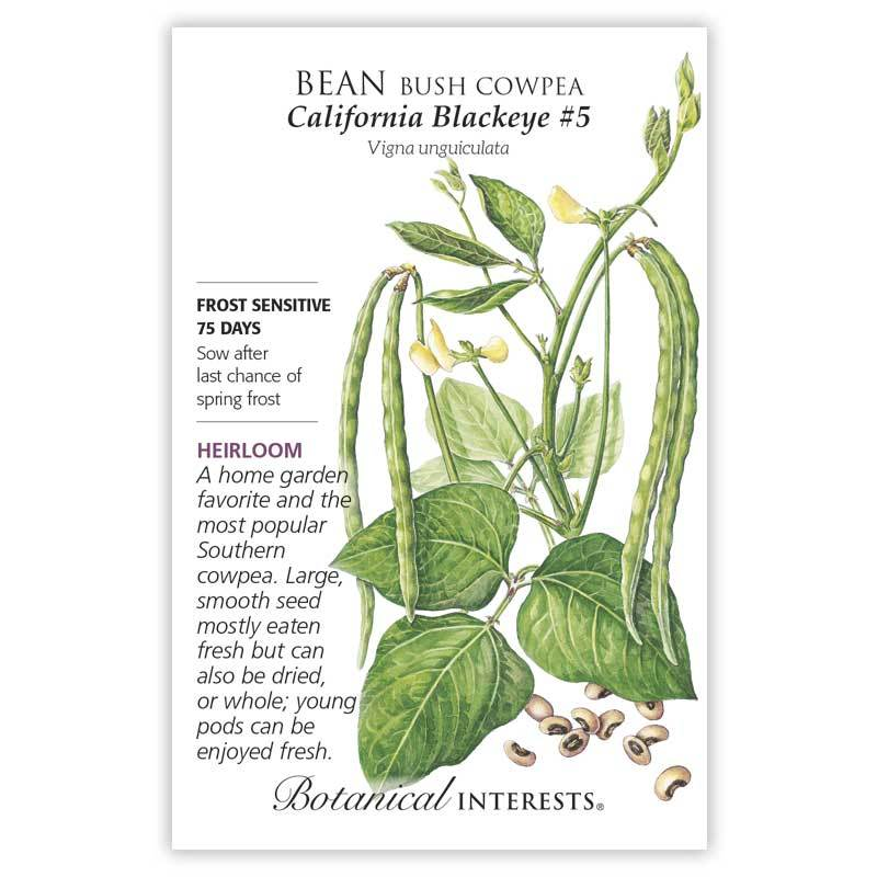 Bean Bush Cowpea, California Blackeye #5