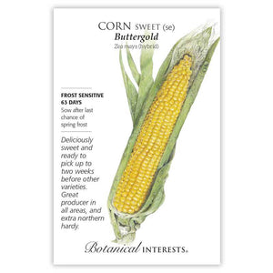 Corn Sweet, Yellow Buttergold