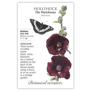 Hollyhock, The Watchman