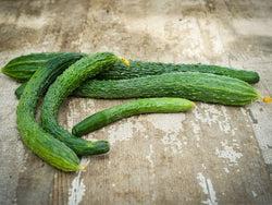 Cucumber, Suyo Long