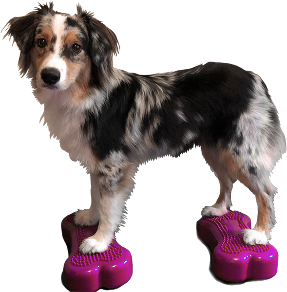 FitPAWS® CanineGym® K9FITbones™ – Minis (set of 2)