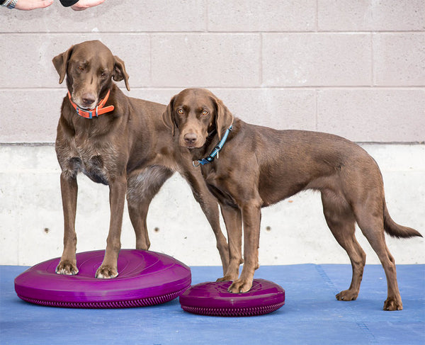 FitPAWS® Balance Disc