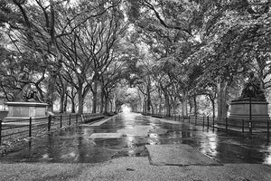Literary Walk black & white photograph by Alex Leykin fine art giclée print
