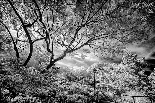 Greystone mansion infrared photograph by Alex Leykin fine art giclée print