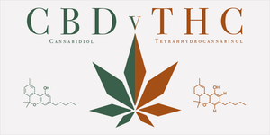CBD and THC - What's the difference?