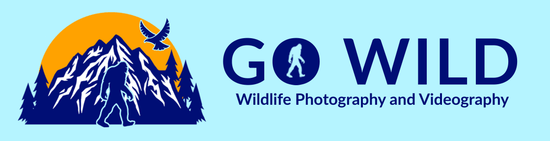 Go Wild Photography