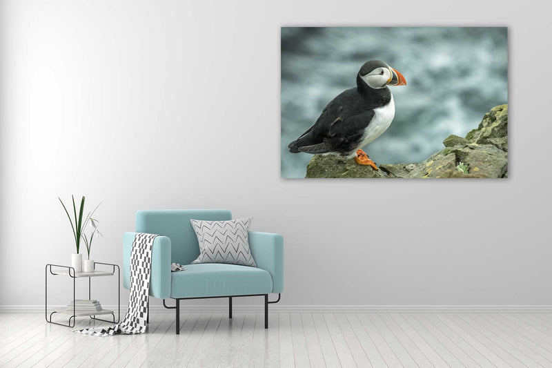 Atlantic Puffin - Go Wild Photography [description]  [price]