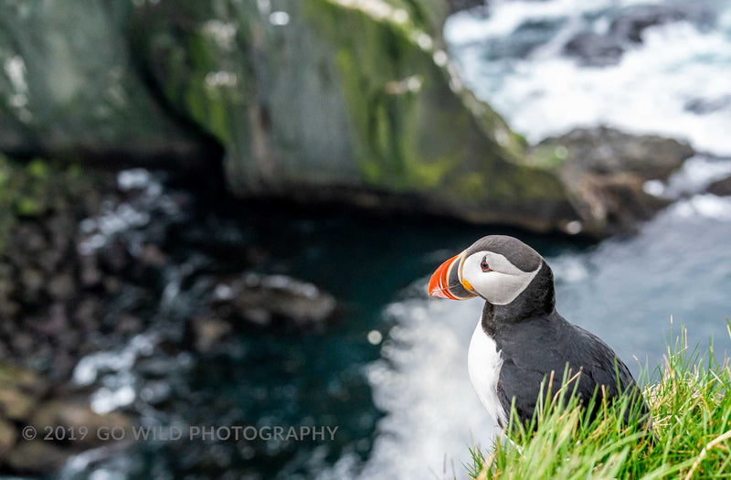 Puffin Cliffs - Go Wild Photography [description]  [price]