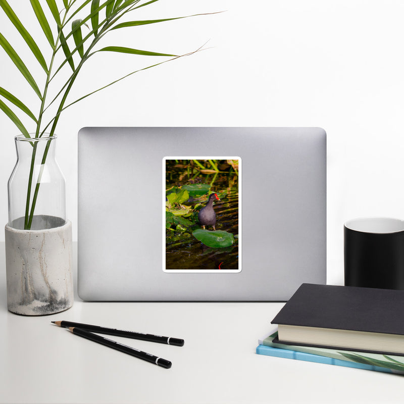Common Moorhen Bubble-free stickers - Go Wild Photography [description]  [price]