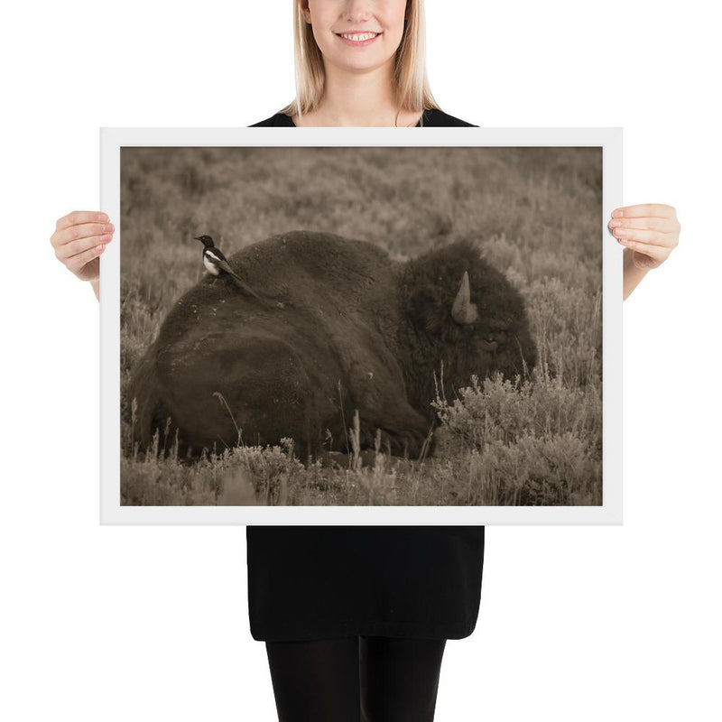 The Bison and the Magpie - Go Wild Photography [description]  [price]
