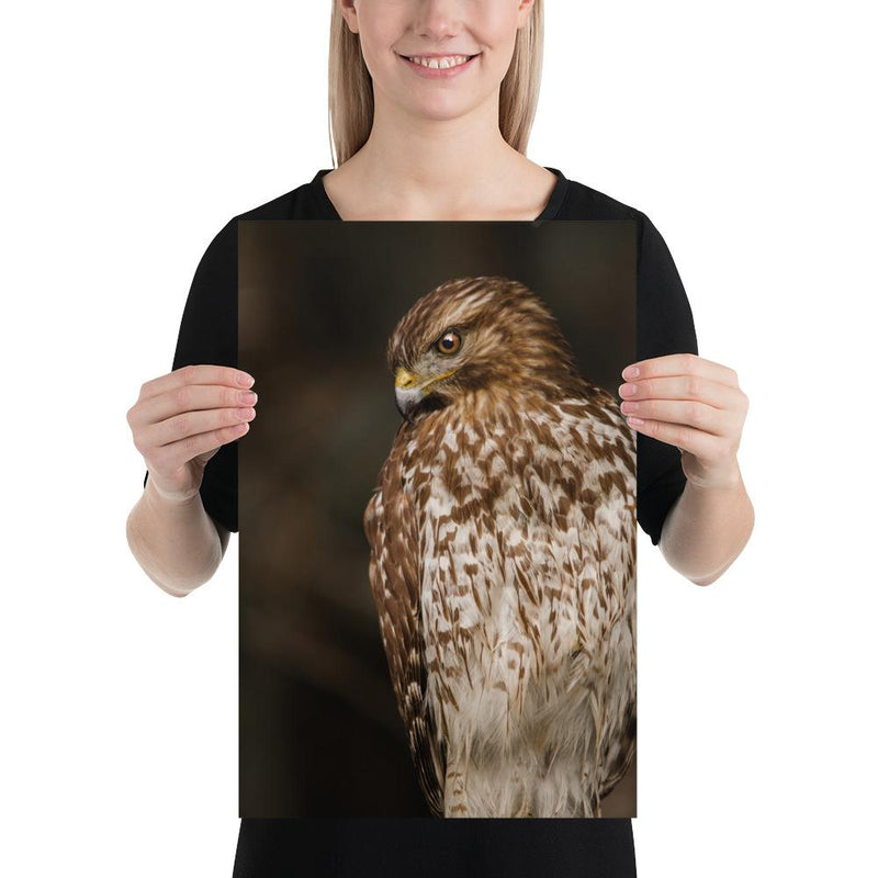 Red Shouldered Hawk - Go Wild Photography [description]  [price]