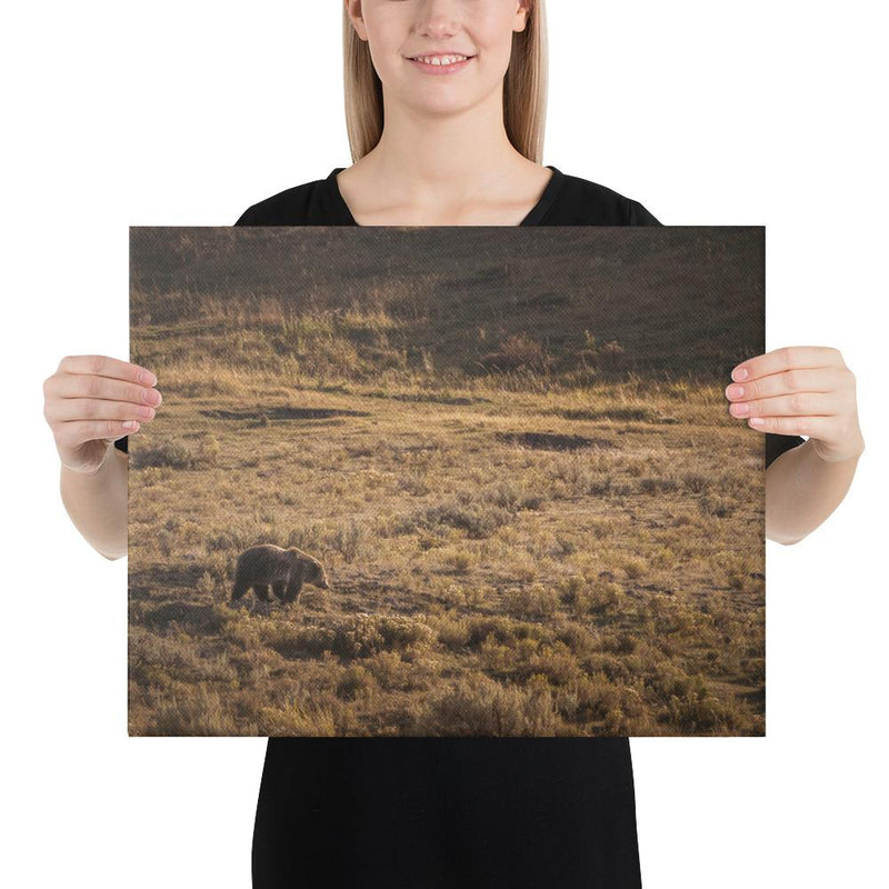 Grizzly - Go Wild Photography [description]  [price]