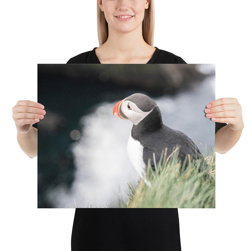 Stoic Puffin - Go Wild Photography [description]  [price]