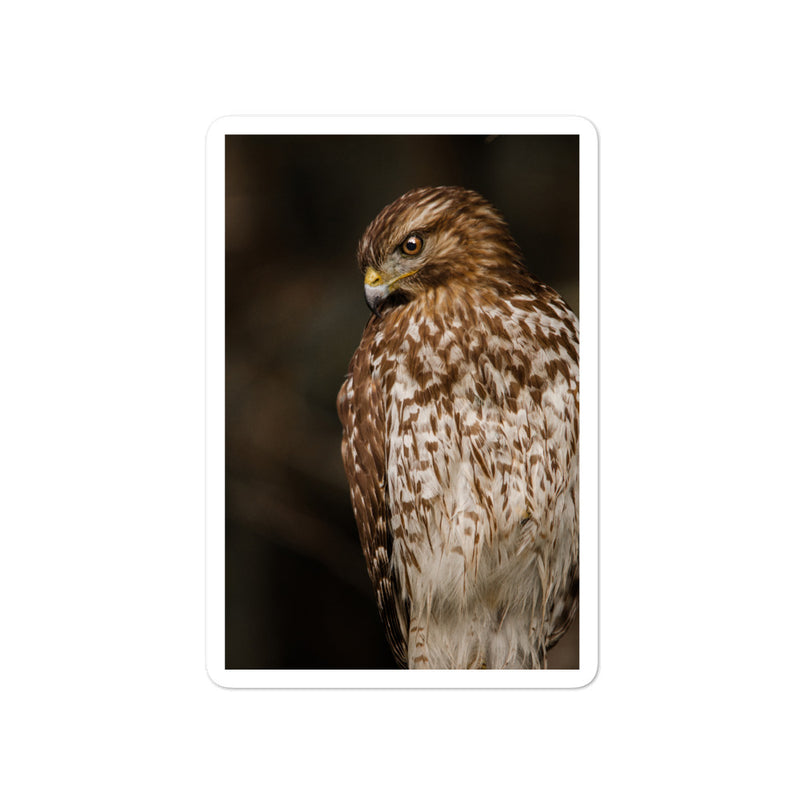Red Shouldered Hawk Bubble-free stickers - Go Wild Photography [description]  [price]