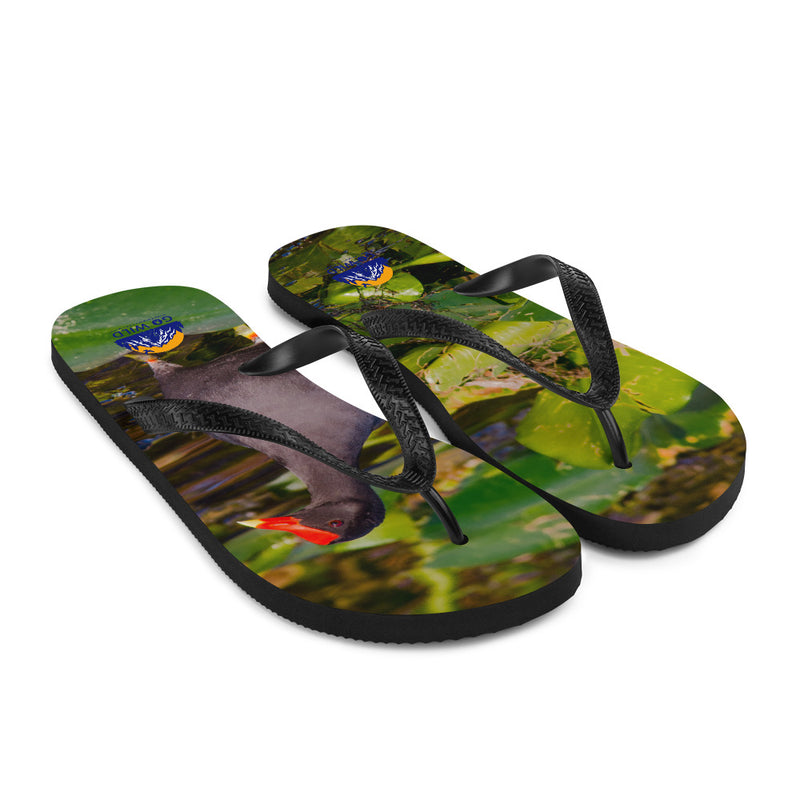 Common Moorhen Flip-Flops - Go Wild Photography [description]  [price]
