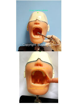 Dental Oral Anesthesia Simulator Model