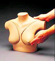 Breast Self Exam Models