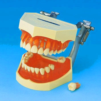 Tooth Extraction Manikin Model Simulator