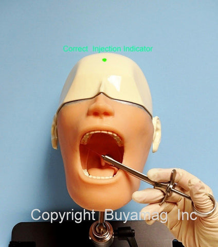 Dental Models Simulators Manikins Phantom Head