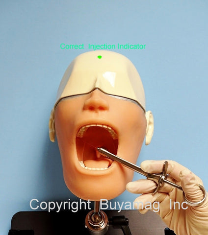 Dental Anesthesia  Smart Simulator Training  Model