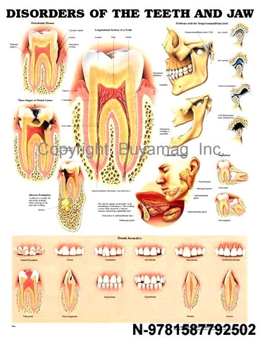 Dental Education Posters Charts
