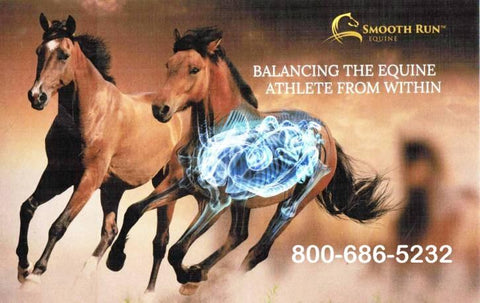 Horse Supplement By Disciplines