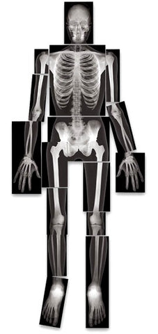 X-Ray Images All Human Parts